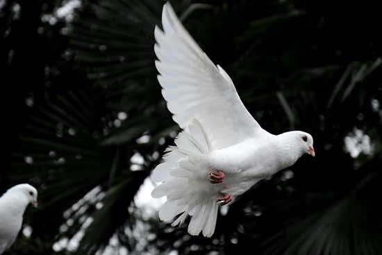 Holy Spirit coming down from heaven in the form of a dove when John baptized Jesus in the Jordan river in Matthew 3