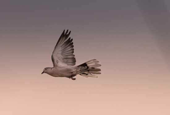 Holy Spirit, represented by a Dove, descending on this earth, guiding, counseling & empowering people