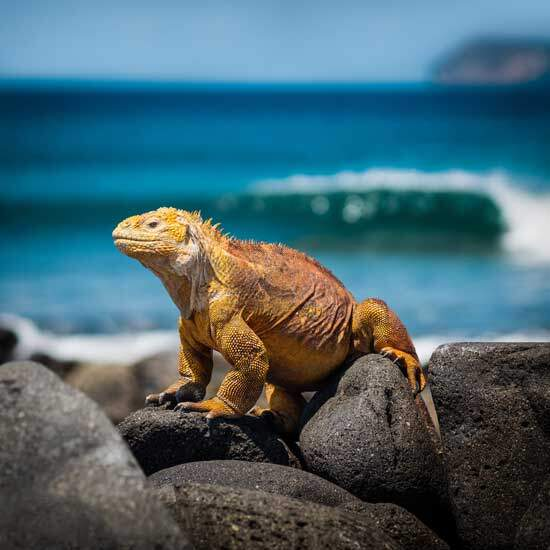 Galapagos iguana as we explore why current science based in Charles Darwin's theory teach different things about our origins