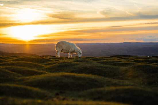 Lamb grazing as sun shines on the landscape, & we are reminded of how God created this world in 6 literal days with purpose
